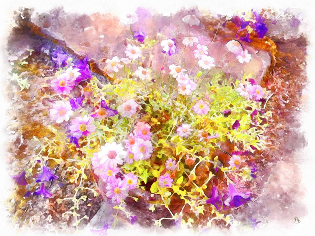 Pink-little-Flowers