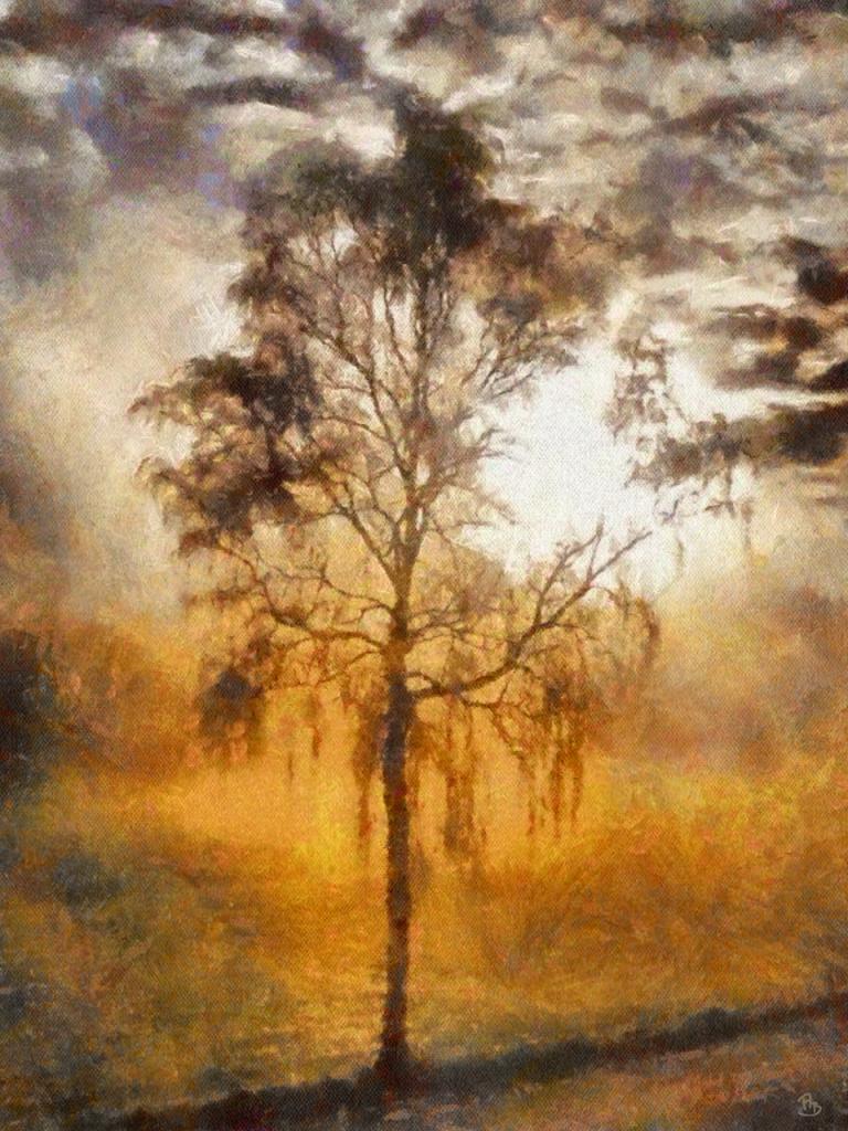 The-Misty-Tree
